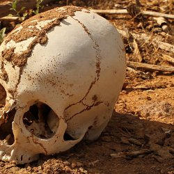 The skull of a migrant found in the desert (photo by Marc Silver)